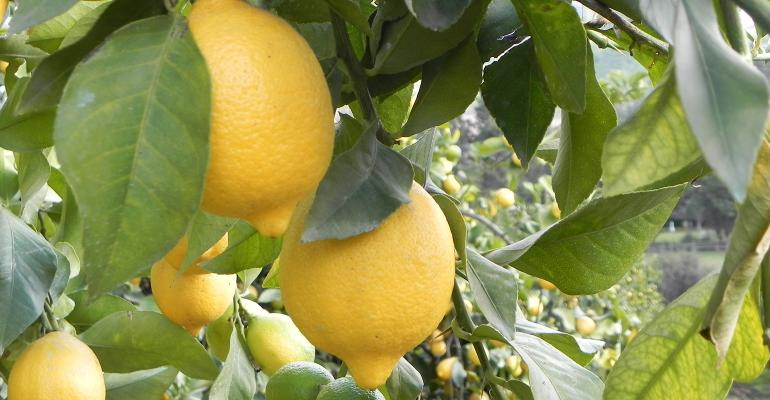 chilean_lemons_ branch_1540x800.jpg