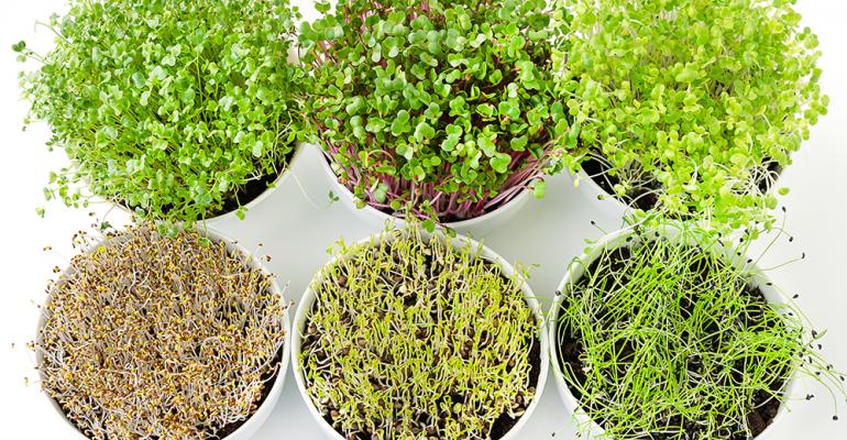 microgreens-flavor-of-the-week.png