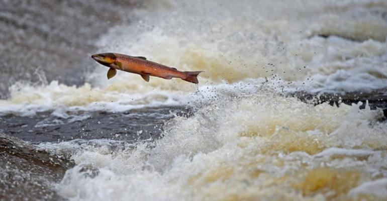 Why salmon prices are at a 30-year high