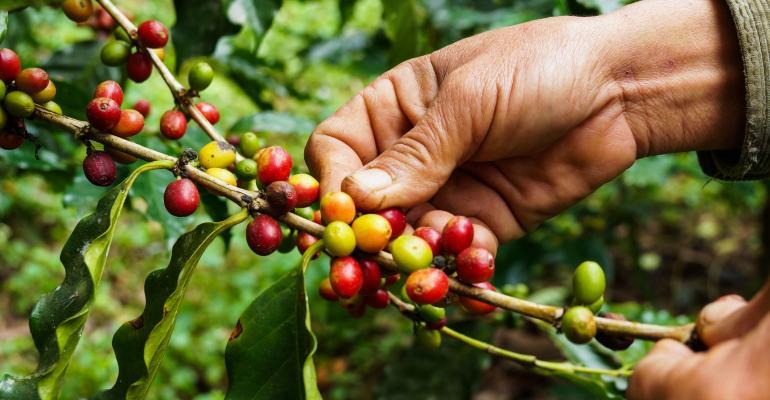 sustainability_through_coffee