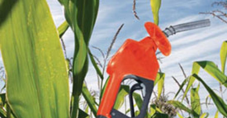 Biofuel quest=kernel conundrum