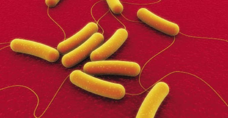 Researchers seek better E. coli testing methods