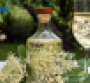 elderflower-2-syrup.png