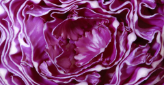 purple-cabbage-flavor-of-the-week.png