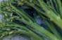 broccolini-flavor-promo.png