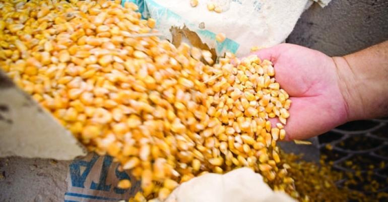 Corn photo Jack KurtzNewscom