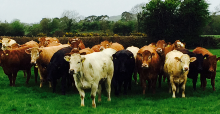 The challenge for Irish beef